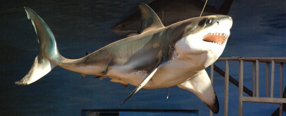 cropped-NatalKZ-SharkDurban_Jung-DRDH2014.jpg